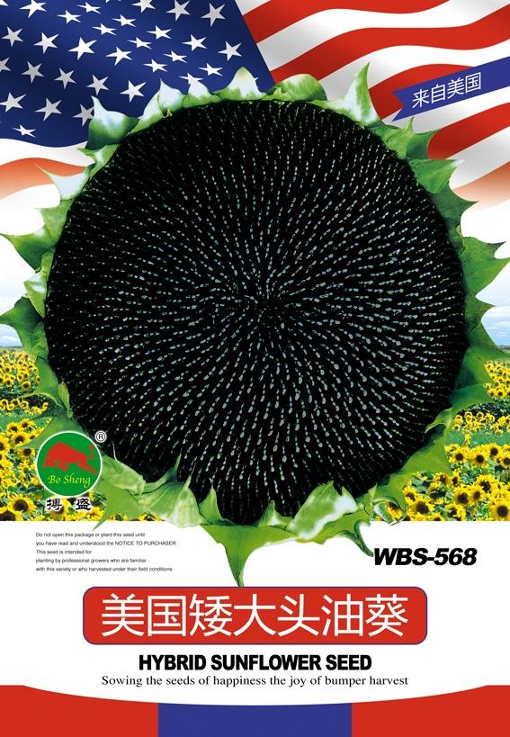 美國矮大頭油葵.jpg