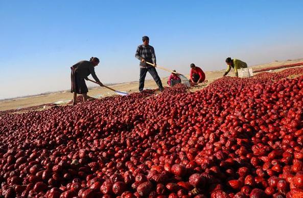 我國紅棗市場與產業調查分析報告—【成都齊力紅食品有限公司】