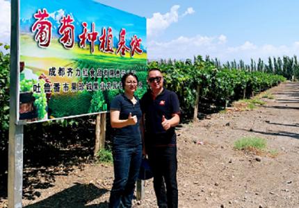 2019年-齊力紅公司董事長于彥平先生陪同沃爾瑪高采到我司吐魯番大型葡萄種植基地參觀。