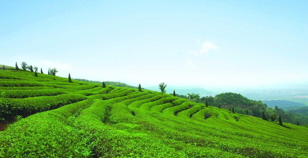 茶山2.png