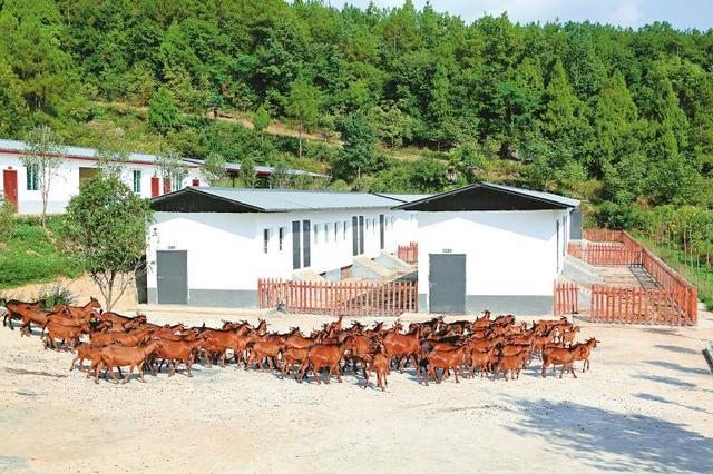 南江县黄羊产业扶贫案例入选全球减贫优秀案例