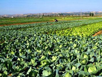 天氣回暖 蔬菜供給充足價格下降
