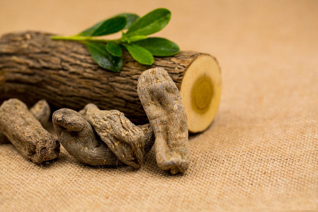 野生天麻和种植天麻的两大区分点
