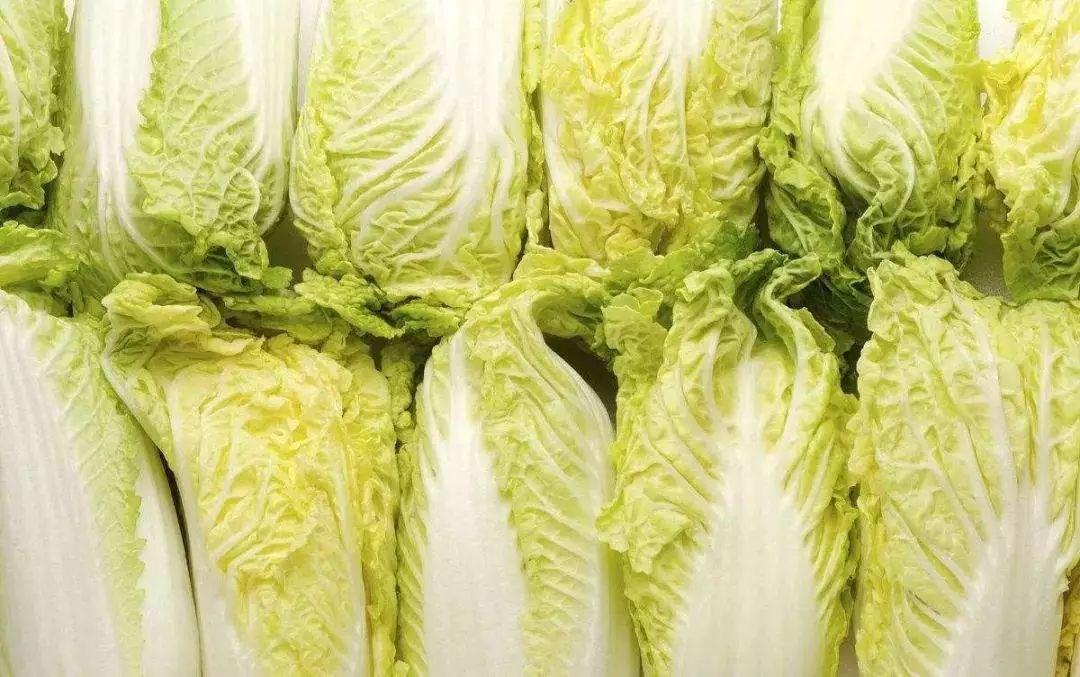 有机大白菜栽种手艺