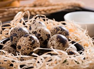 精品鵪鶉蛋