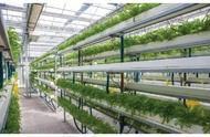 盘点几种现代农业生产经营的常见模式