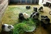 海貍鼠擠傷的癥狀及防治措施