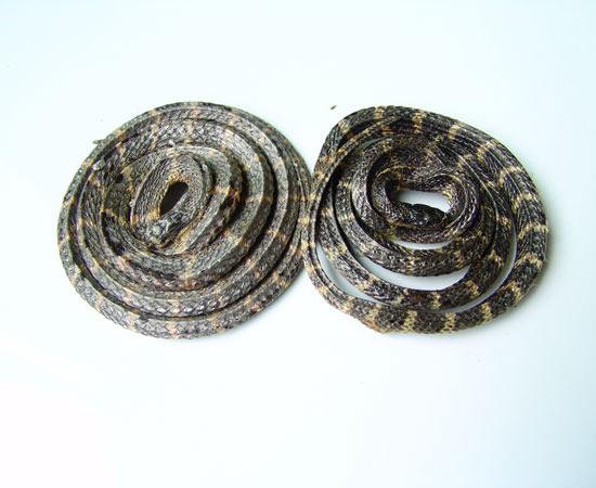盘形银环蛇干