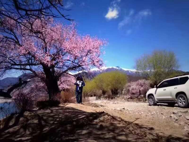 2019年3月川藏北线转南线桃花梨花拼车活动线路