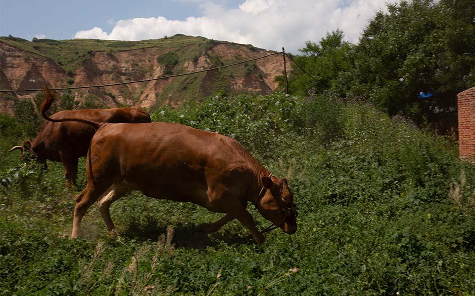 宏源牧业养殖基地