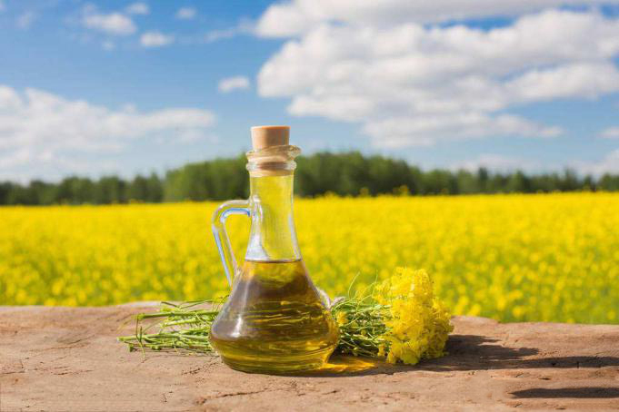過期菜籽油的小妙用