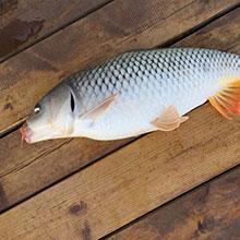 天然池塘自產生態魚