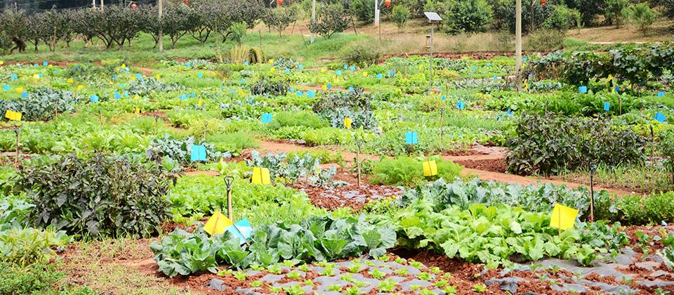 家庭農場 為您訂制的田園生活