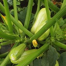 農莊自產生態蔬菜