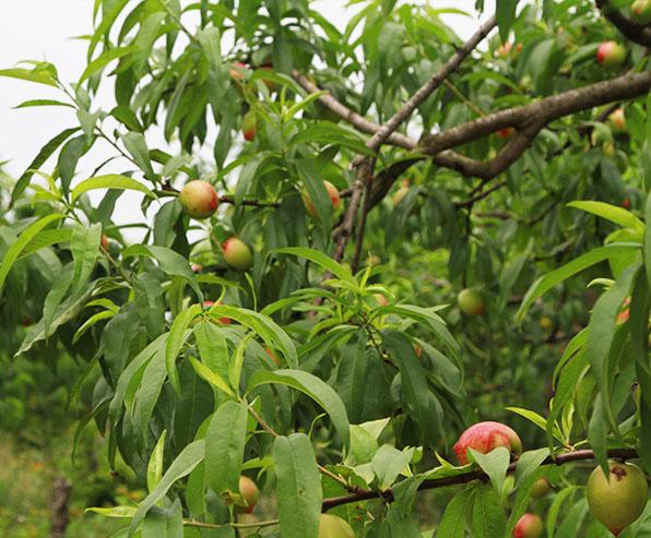 水果采摘基地
