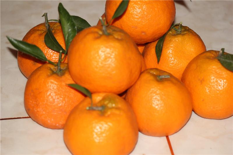 開江響水柑橘園