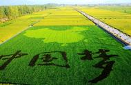 中國未來農業發展前景分析:五大趨勢蘊含無限潛力