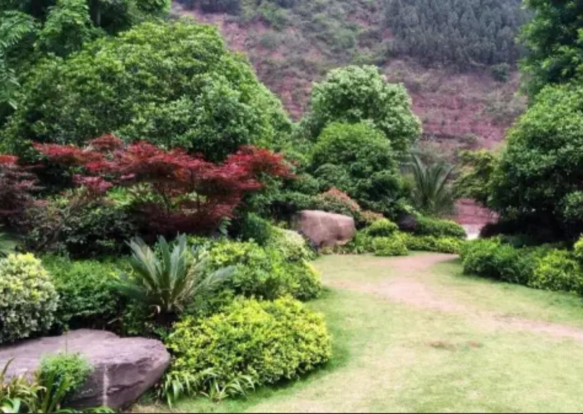园林植物搭配技巧