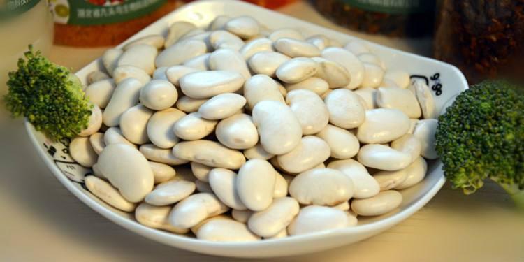 怎样种植芸豆?芸豆的种植技术介绍