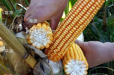春耕備耕忙 種業迎來發展黃金期