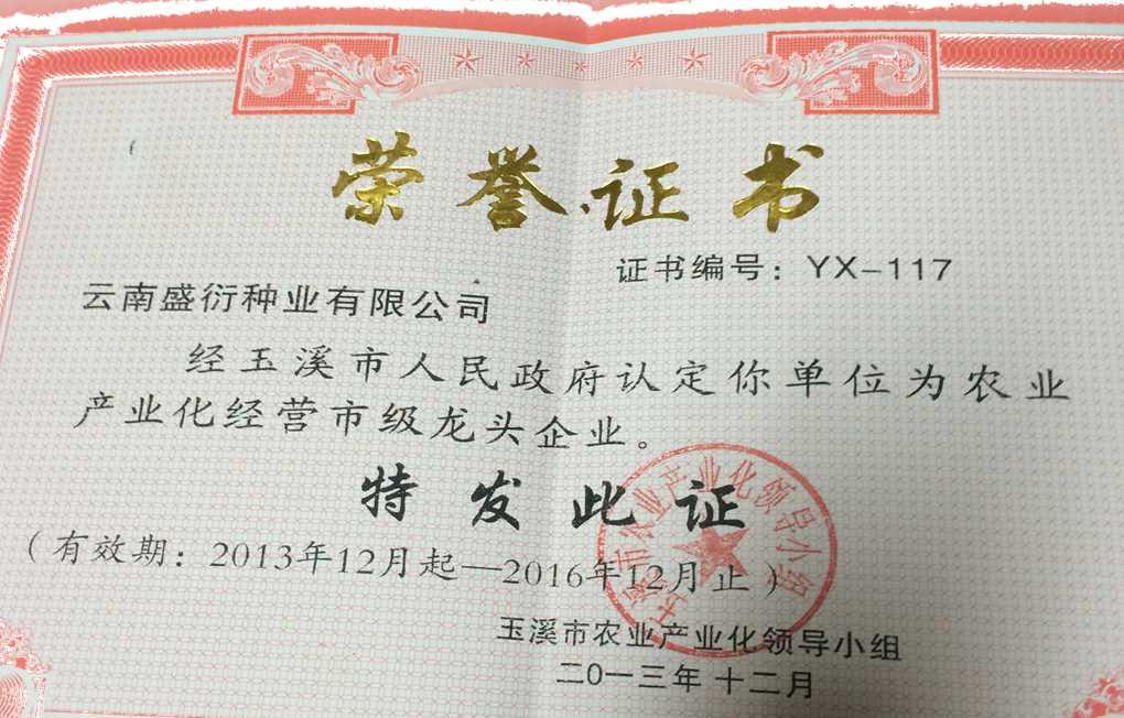 市級龍頭企業榮譽證書