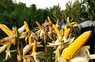 抗疫情保供給 農機助推蔬菜生產